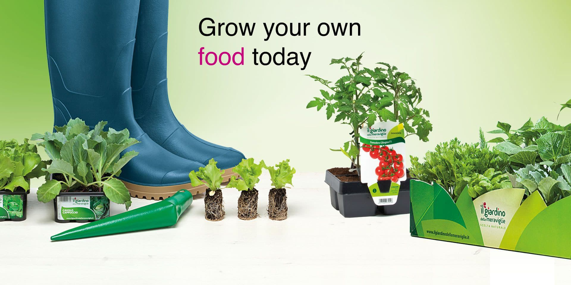 Grow your own food today